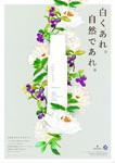 ナチュラルEx ポスター / ハリウッド化粧品